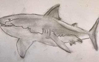 White Shark by Liam, aged 10