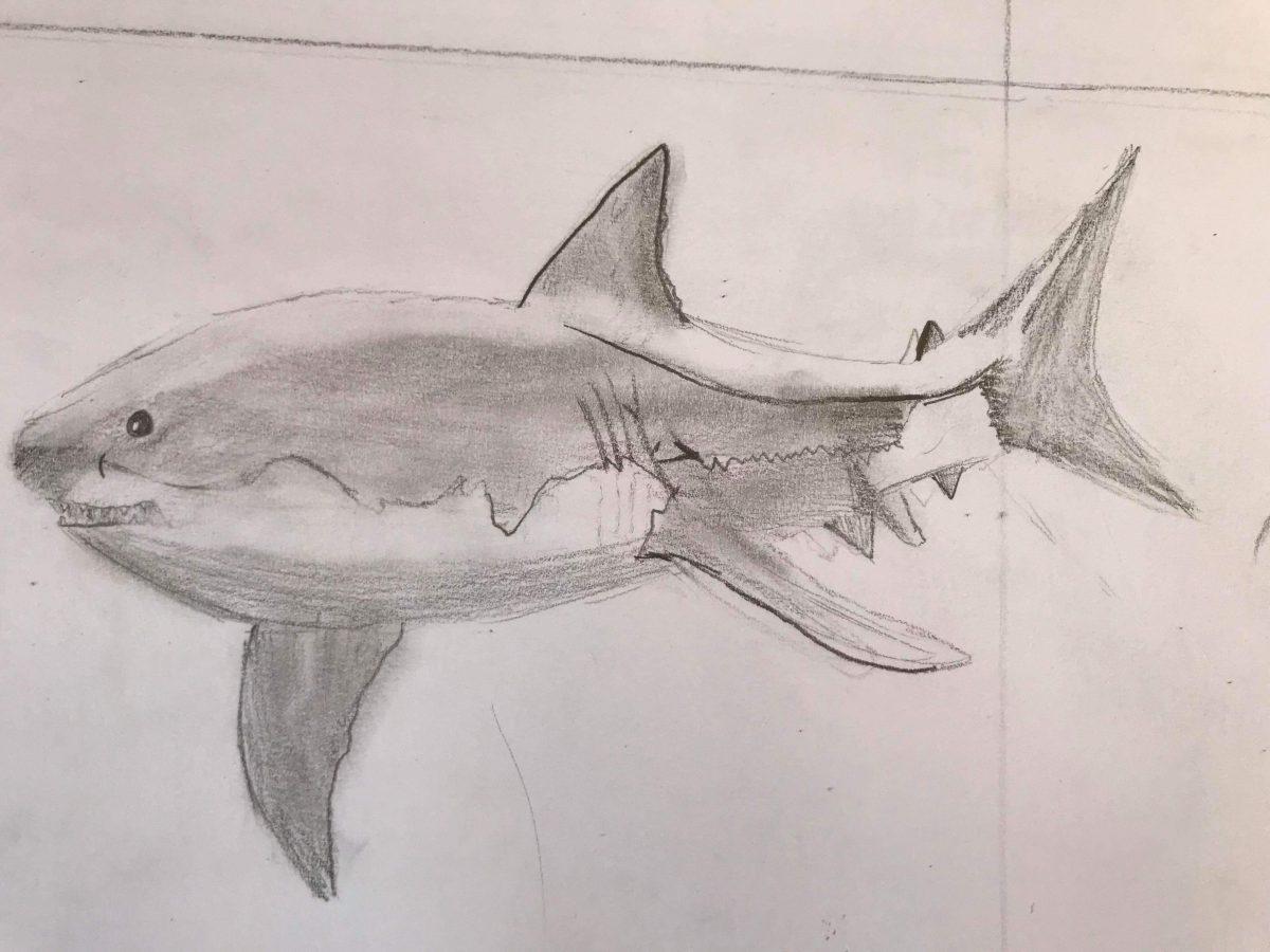 White Shark by Estelle, aged 10