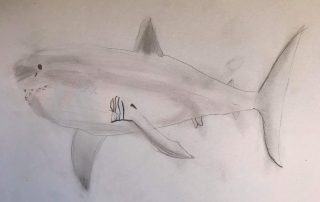White Shark by Coco, aged 10